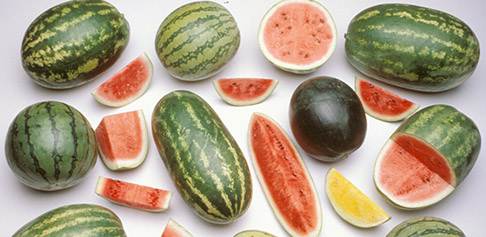 WatermelonVarieties_homepage.jpg